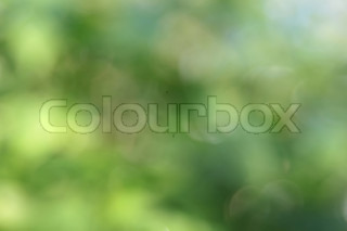Abstract green beautiful natural background