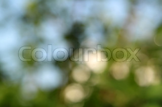 Abstract spring beautiful natural background with bokeh effect