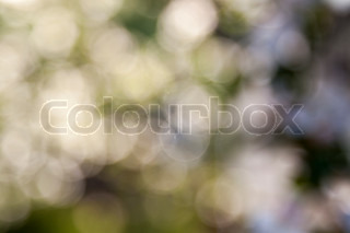 Abstract blurred beautiful natural background with bokeh effect