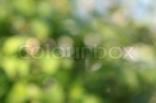 Abstract summer beautiful natural background