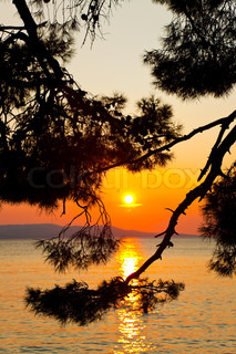 Pine tree branch and sunset