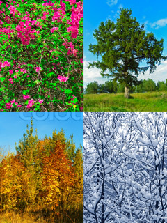 Four seasons (my photos)