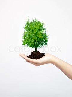 Billede af 'vokse, hold, Plant'