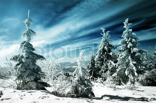 snow covered fir trees in mountains under blue sky with clouds