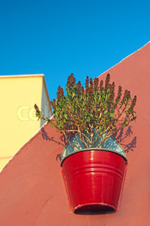 Plant in a pot