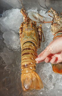 shrimp  on ice at a market in Thailand