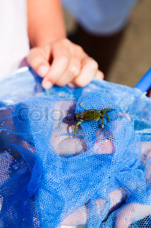 Fresh crab caught in a net