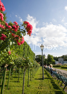 Image of 'europe, chairs, roses'