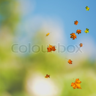 beauty colors of the autumn, environmental backgrounds with maple foliage