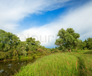 summer landscape with the river and the forest, a panorama