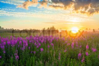 rural landscape with the sunrise, a blossoming meadow and fog