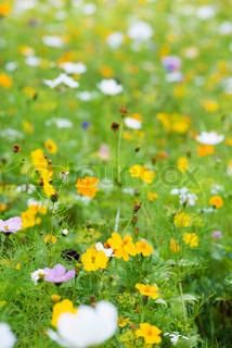 Image of 'meadow, field, green'