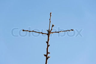 Image of 'cross, branches, almond tree'