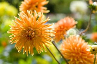 Billede af 'blomst, festspil, closeup'