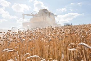 Billede af 'landbruget, skandinavien, closeup'