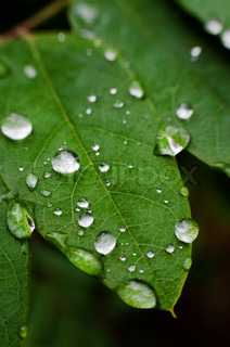 Leaf with rain droplets. Selective focus