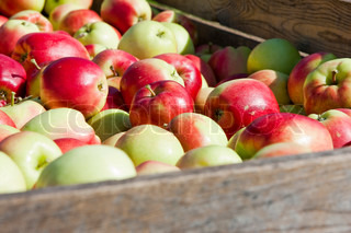 Fresh apples in a wooden crate