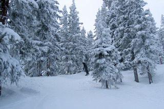 Billede af 'vinterferie, vinterlandskab, Vinter'