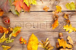 Billede af 'blad, bøg, efteråret'