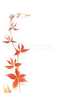 Billede af 'efterår, pyntning, minimalist'