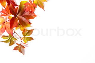Billede af 'efterår, hvid, enkel'