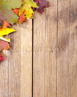 Billede af 'efterår, indendørs, closeup'