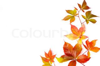 Billede af 'efterår, indendørs, enkel'