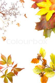 Billede af 'efterår, pynt, hvid'