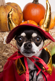 Cute Halloween Devil Dog