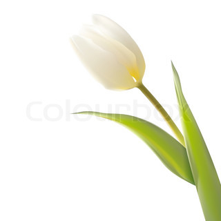 Tulip, floral background.
