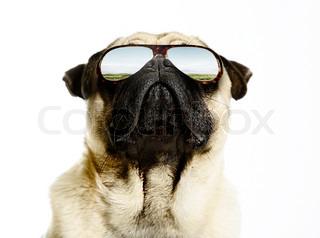 Billede af 'hunde, bulldog, hund'