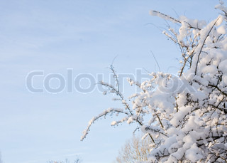 Image of 'snow, winter, snowing'