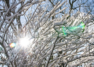 Image of 'winter, tree, sun'