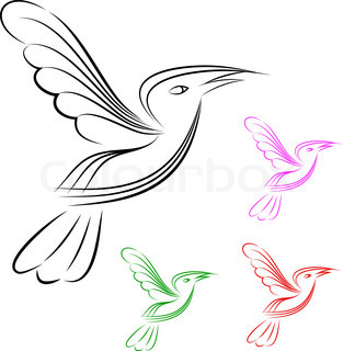 bird in white background