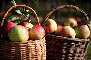 Billede af 'frugt, æbler, danske'