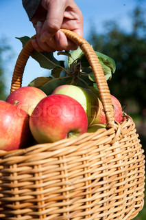 A woman carrying a basket with fresh apples
