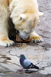 Bear and pigeon