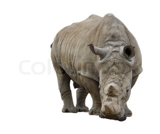 Billede af 'afrika, vildmark, hud'