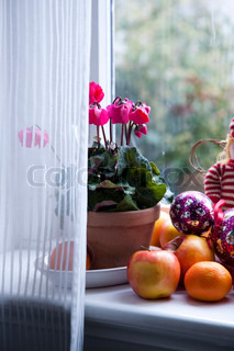 Cyclamen flowers used for window decoration