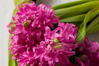 Billede af 'hyacint, blomst, plante'