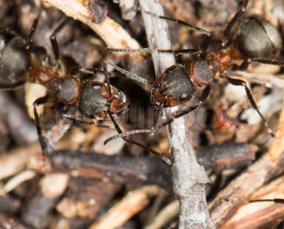 ant in nature. close-up