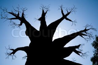 Billede af 'gren, luften, plante'