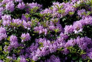 Billede af 'smuk, planter, closeup'