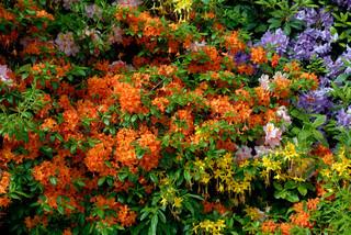 Billede af 'smuk, planter, tyskland'