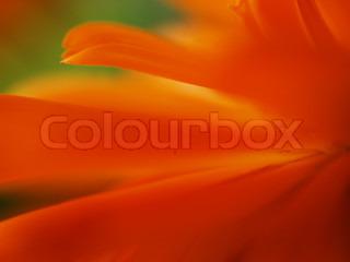 Billede af 'baggrund, orange, tæt'