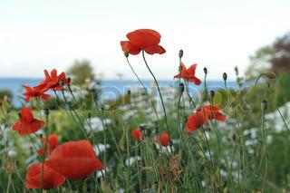 Billede af 'dagslys, årstider, closeup'