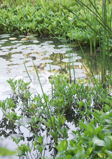 Billede af 'Plant, plante, naturlig'