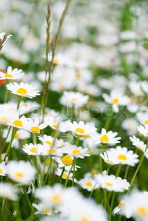 Billede af 'den, blomstre, bagagerum'