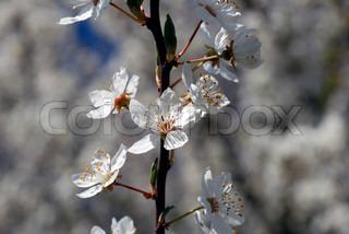 Billede af 'Tree, Branch, afviger'