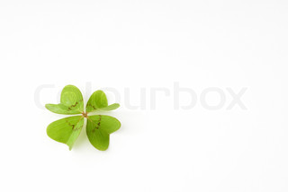 Image of 'clover, ireland, plant'